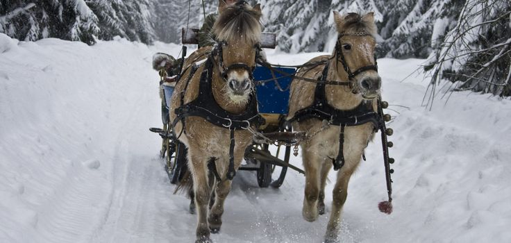 romantische Kutschfahrten mit dem Pferdeschlitten.