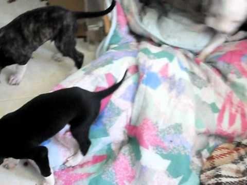 galghini nati il 26 febbraio 2011 progetto animalista per la vita