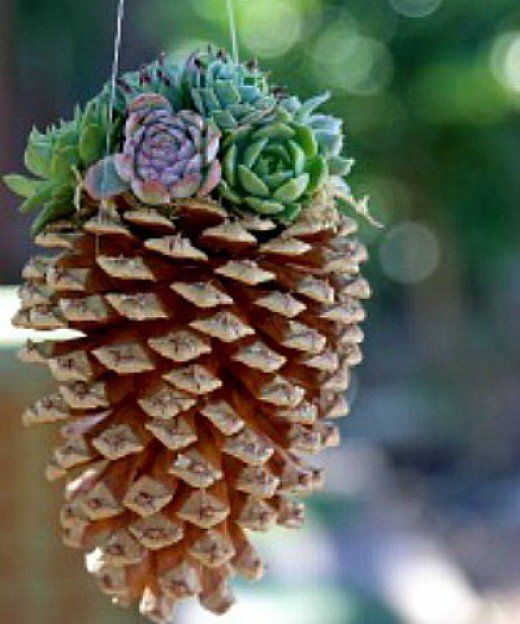 Best 25+ Pinecone Owls Ideas On Pinterest
