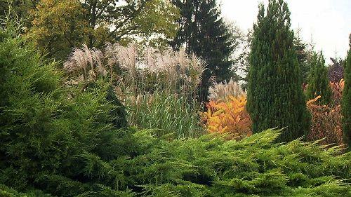 Maja w ogrodzie Marzena Bąkowska Arboretum Trojanów pennisetum, rozplenica, trawy ozdobne ornamental grasses