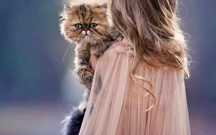 Download wallpapers Persian cat, 4k, fluffy cats, pets, kitten, child