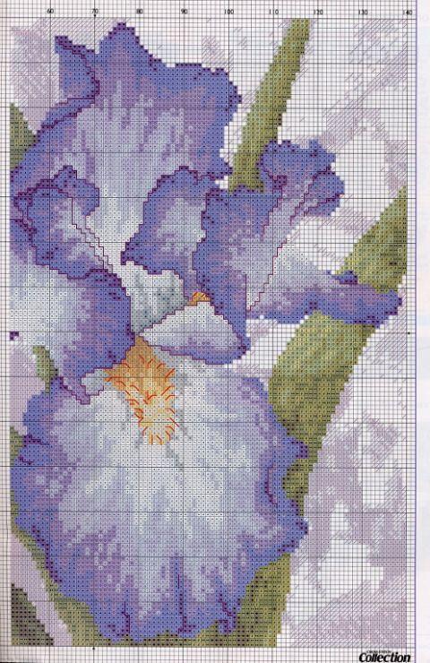 Iris partie 1