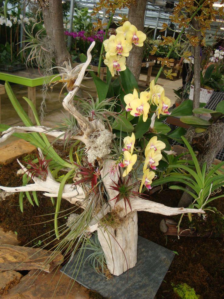 Orchid & Tillandsia Arrangement on Driftwood