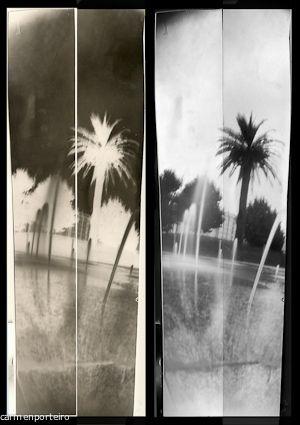 palmeras 2 tiras de 20×3 cm