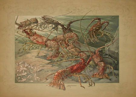 Art Nouveau Lobsters by Anton Seder from Das Thier in der Decorativen Kunst, Vienna: 1896-1909, a sourcebook intended to provide inspiration for designers of fabrics, wallpaper, ceramics, book illustrations, posters and advertisements.