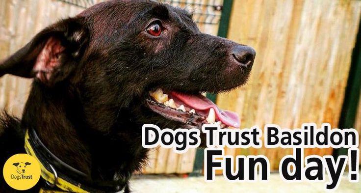 Dogs Trust Essex Fun Day