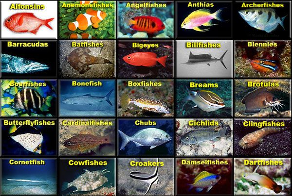 Amazing site saltwater fish identification emphasis on for Types of fish in hawaii