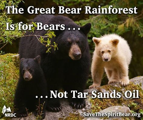 SPEAK OUT!  Any day now, Canada's federal government will decide whether to approve the Northern Gateway tar sands oil pipeline, which threatens to destroy the rainforest home of some of the very last Spirit Bears on Earth. Send the message to the B.C. Premier to stand strong against this tar sands oil disaster in the making! PLZ Sign & Share!  https://secure.nrdconline.org/site/Advocacy?cmd=display&page=UserAction&id=3483&s_src=FBOSPIPETSOC0614LL