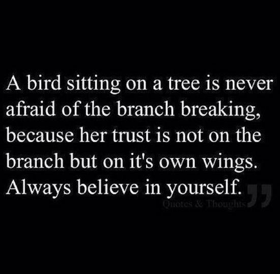A Bird is Never Afraid of The Branch Breaking