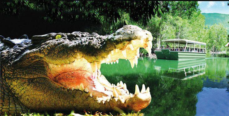 Hartley's Crocodile Adventure from $37 Visit http://www.fnqapartments.com/tour-hartley-s-crocodile-adventure/area-cairns/  #cairnstourpackages