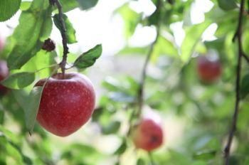 How to Find Organic Fruit Trees for Sbale