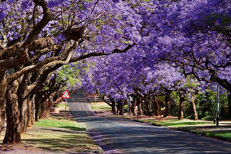 Named after the original farm that stood there when #Pretoria was founded in the 19th century, #Waterkloof is one of the city's most exclusive suburbs. #SouthAfrica #suburb
