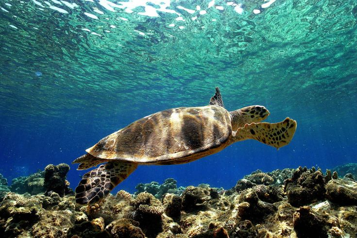 The Long Conservation: Studying Sea Turtles Is a Practice in Patience - Pacific Standard