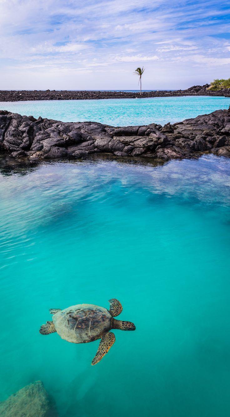 Sea Turtle at Kiholo Bay - Kona Coast, Hawaii