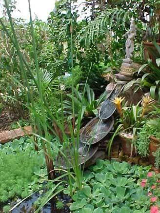 """Tropical garden 9 - BBC Boracay says: """" Our very own selection of Tropical Gardens."""""""