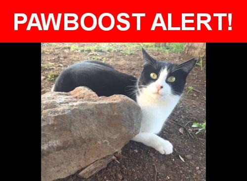 Please spread the word! Brave was last seen in Morgan Hill, CA 95037.    Nearest Address: 15430 Barcelona Court, Morgan Hill, CA, United States
