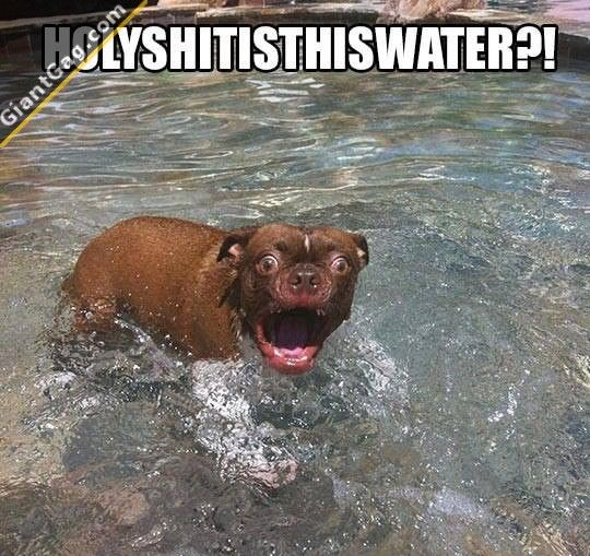Holy Shit is this water? #funny