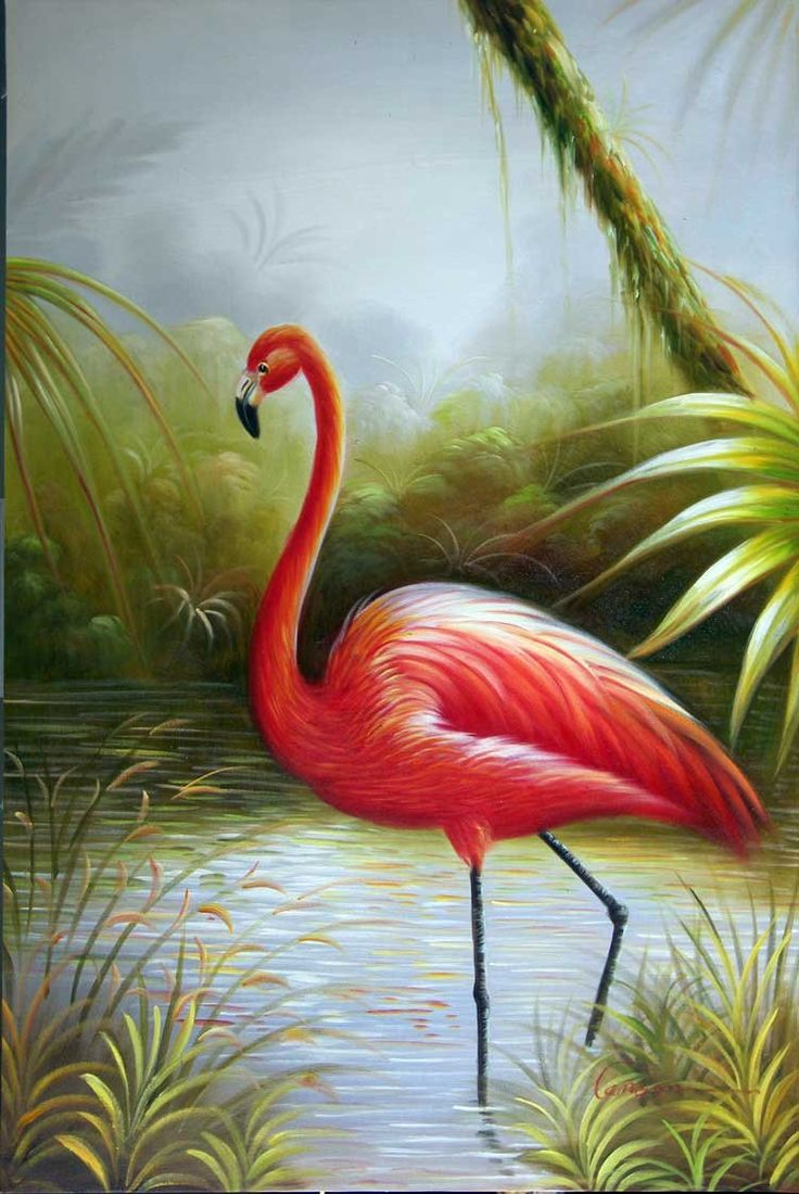 flamingo bird - Google Search