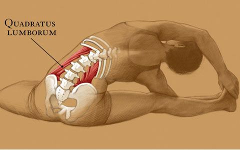 This is a Muscle that causes lower back pain from lack of stretching... The QL must be stretched daily, specially if you sit all day.