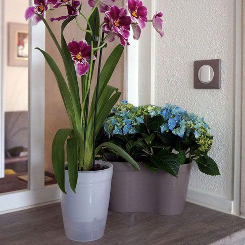 Mémo entretien de vos orchidées.  Pour conserver vos orchidées, il faut coupler chaleur, lumière, humidité, mais éviter de trop arroser. Ne surtout pas laisser de l'eau stagnante au pied de la plante  !