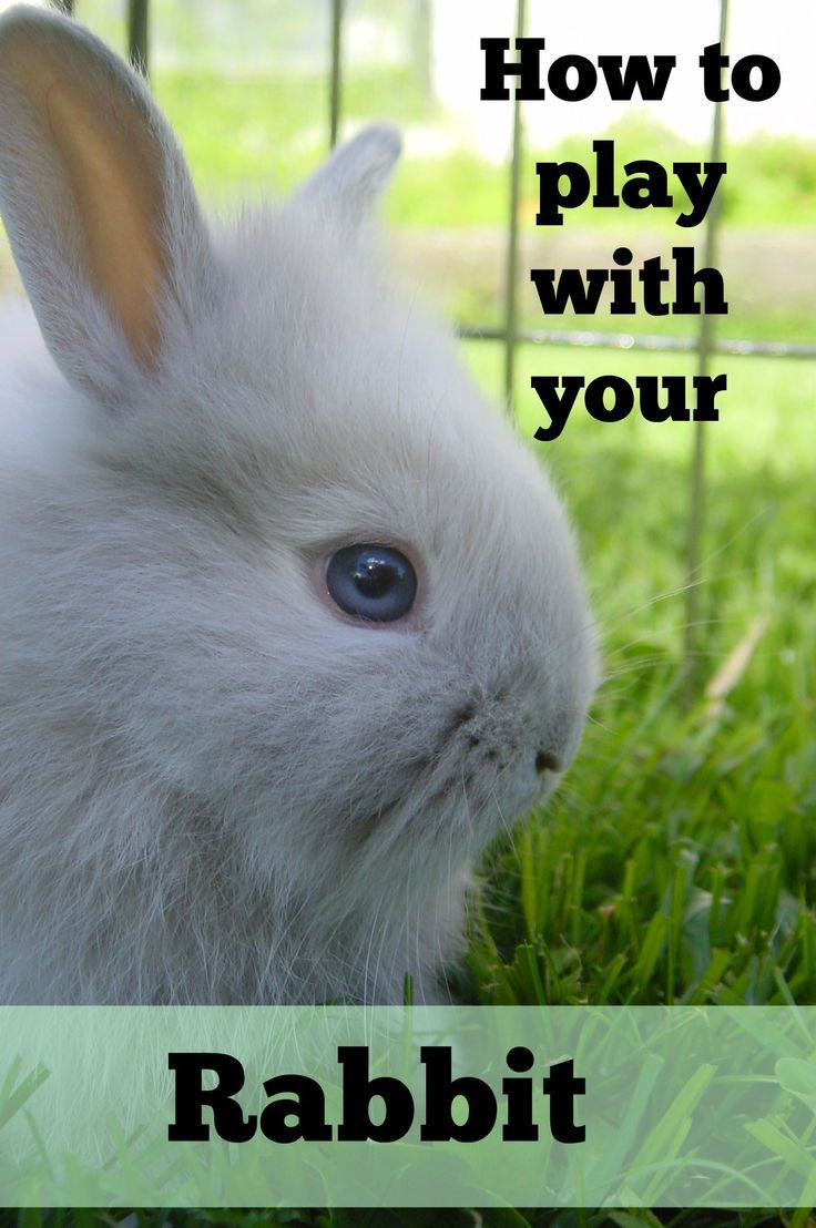 495 best all rabbits images on pinterest bunny rabbits animals