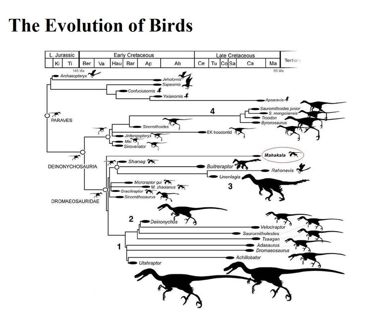 105 best images about Evolution & Geology on Pinterest