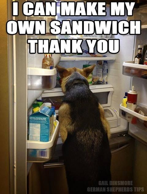 See more HERE: https://www.sunfrog.com/Pets/LOVE-German-Shepherd-Dog-Black-Guys.html?53507 I can make my own sandwich now where is the mayo