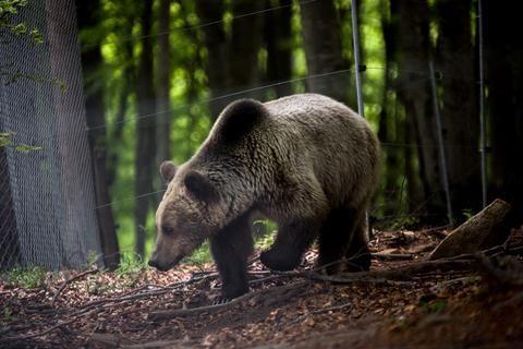 Ανεξήγητα Φαινόμενα...: Ξυπνούν σιγά σιγά οι αρκούδες από την χειμερία νάρ...