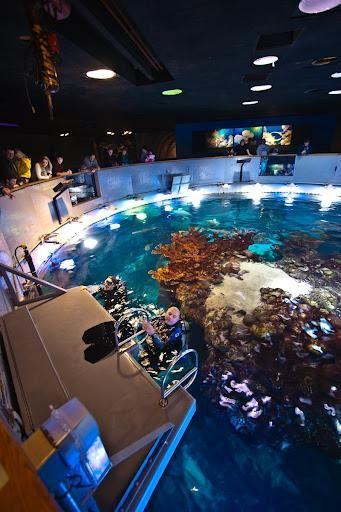 ... images about aquariums on Pinterest Dubai, Home aquarium and Public