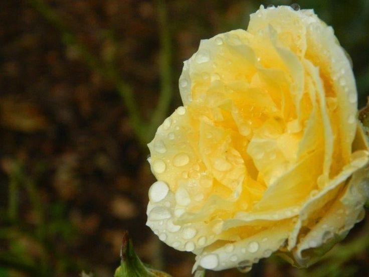 Mellow Yellow - by Daniel Augustyn