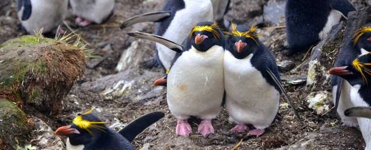 Guys, this is not a drill. Antarctic scientists need you to study photos of penguins to help them figure out how climate change is affecting these stumpy little flightless birds. Scientists from the UK have installed a series of 75 cameras near...