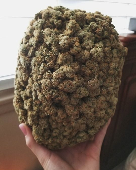 ☎+1(702)609-1715 (WhatsApp,text , call,WeChat ) We are a Licensed Cannabis Delivery Service We ship TOP SHELF (CALI BUD/WAX packs!from LA,WE got FLAVORS ON DECK, if u want CALI BUD WE GOT YOU WE SHIP to anywhere in the US & Canada if u are interested in placing an order legalcannabisdoctor@gmail.com
