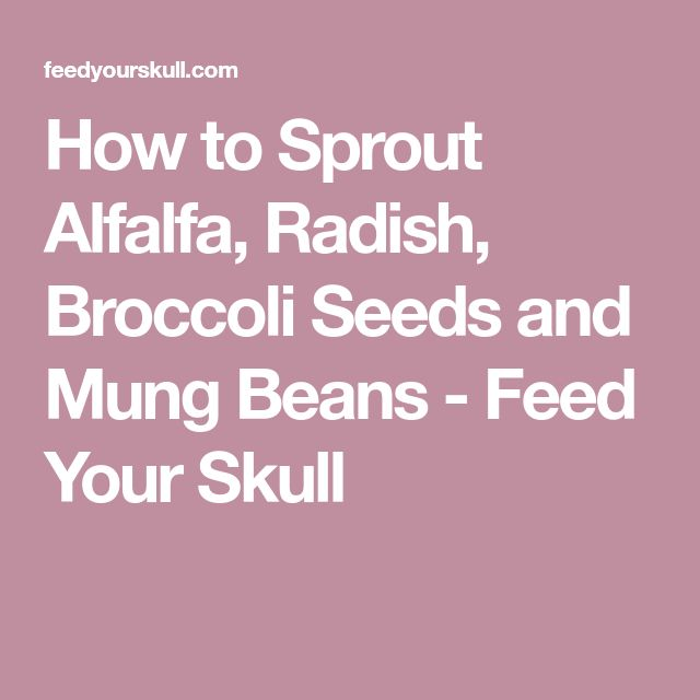 How to Sprout Alfalfa, Radish, Broccoli Seeds and Mung Beans - Feed Your Skull