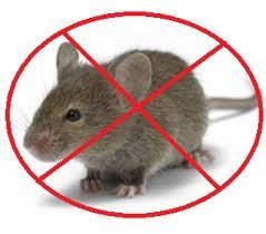 Mice Control Service by Fumapest http://termitesvic.com.au/rats-mice/
