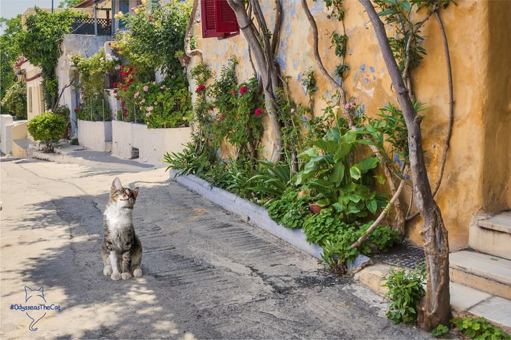 #OdysseasTheCat found a window of opportunity... to take a quick stroll around Anafiotika, the most scenic tiny neighborhood of Plaka! Care to join him?