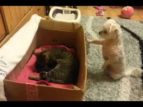 Puppy Sees Kittens For the First Time