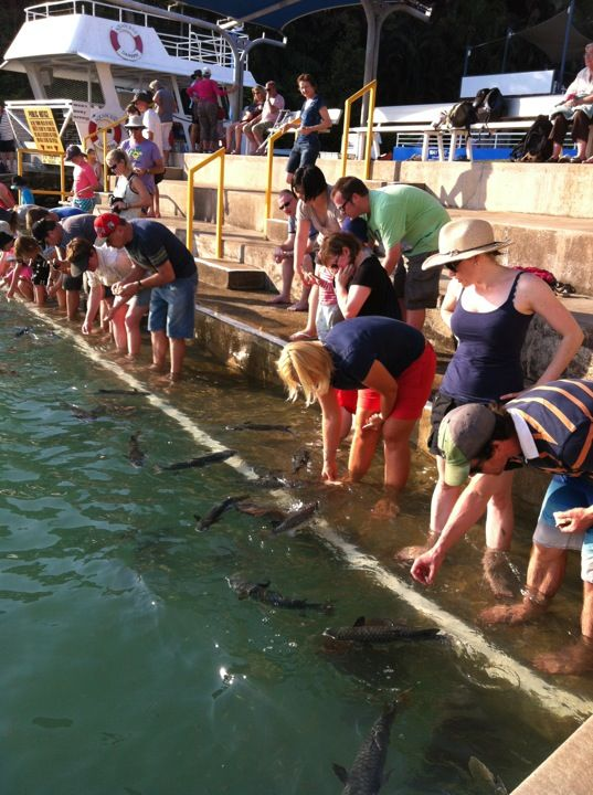 Aquascene in Darwin, NT A fun time feeding the milkfish.
