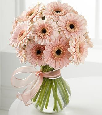 love these colored daisies