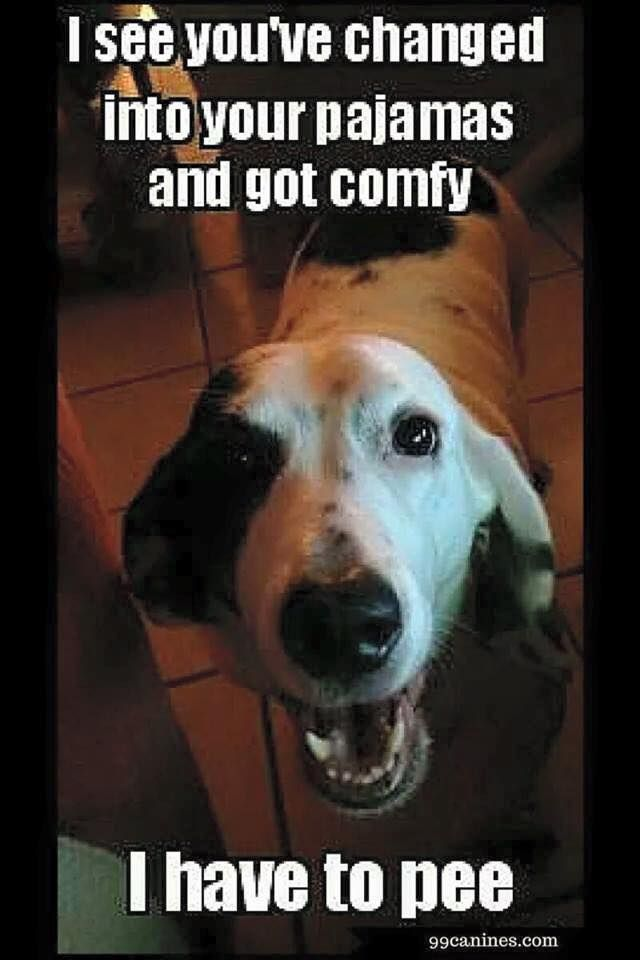 Funny Dog Have To Pee Meme Http Jokideo Com Funny Dog