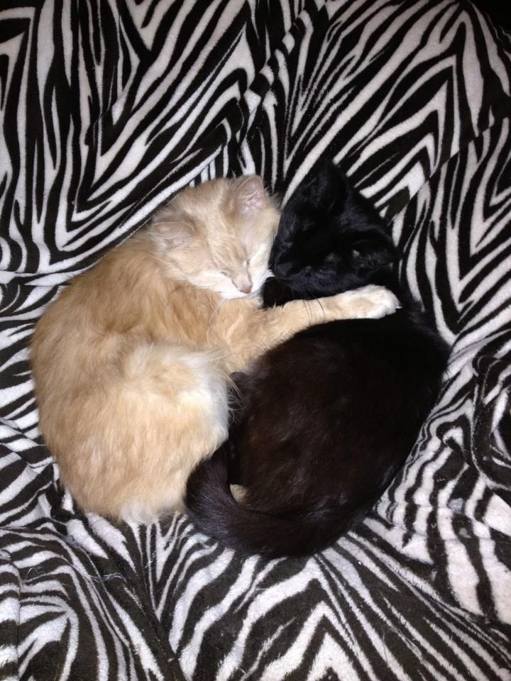 """Cute Animals - Dogs / Cats Chatham-Kent-Ontario I Glasshouse Nursery / Betula Boutique """"CUTEST PET CONTEST"""" -  See contest details here ow.ly/pV8a5 - Good Luck!! www.facebook.com/... and www.facebook.com/..."""