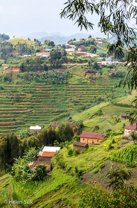 These lush, green-terraced hills surround Lake Kivu, Rwanda's largest lake and one of Africa's Great Lakes.