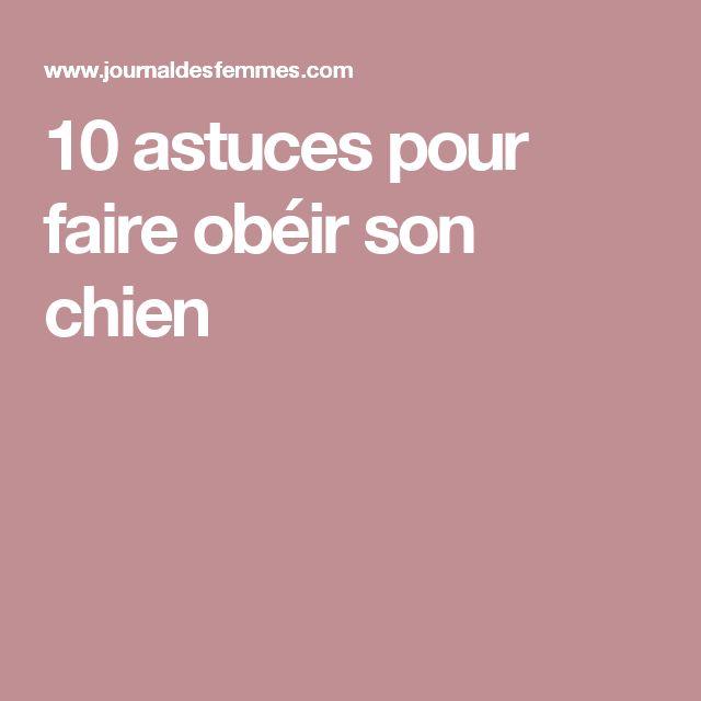 10 astuces pour faire obéir son chien