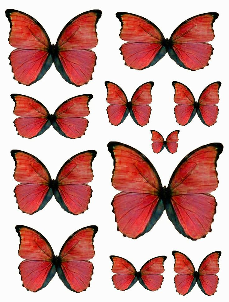Free red butterflies.