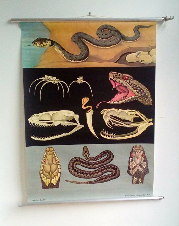 Reptile Chart - Antique Animals - Snakes and Vipers - JKQ chart - Black Background - Anatomy of Snake - Snakes and ladders