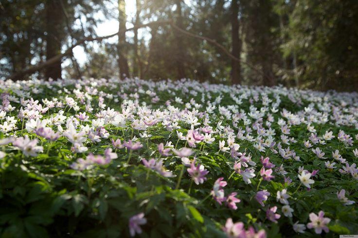 Flowers of spring by Henrik Palshøj on 500px