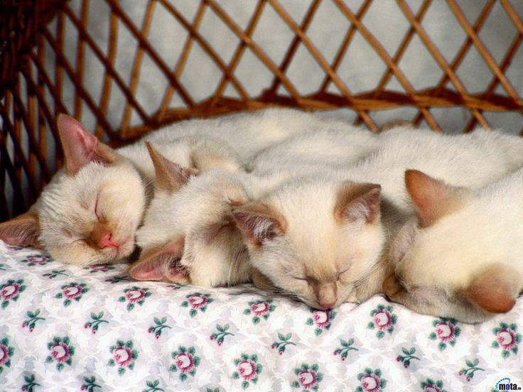 Kittens - mobile backgrounds: http://wallpapic.com/animals/kittens/wallpaper-32016