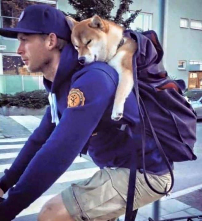 When doge is tired hooman carries doge home http://ift.tt/2dwhfJC