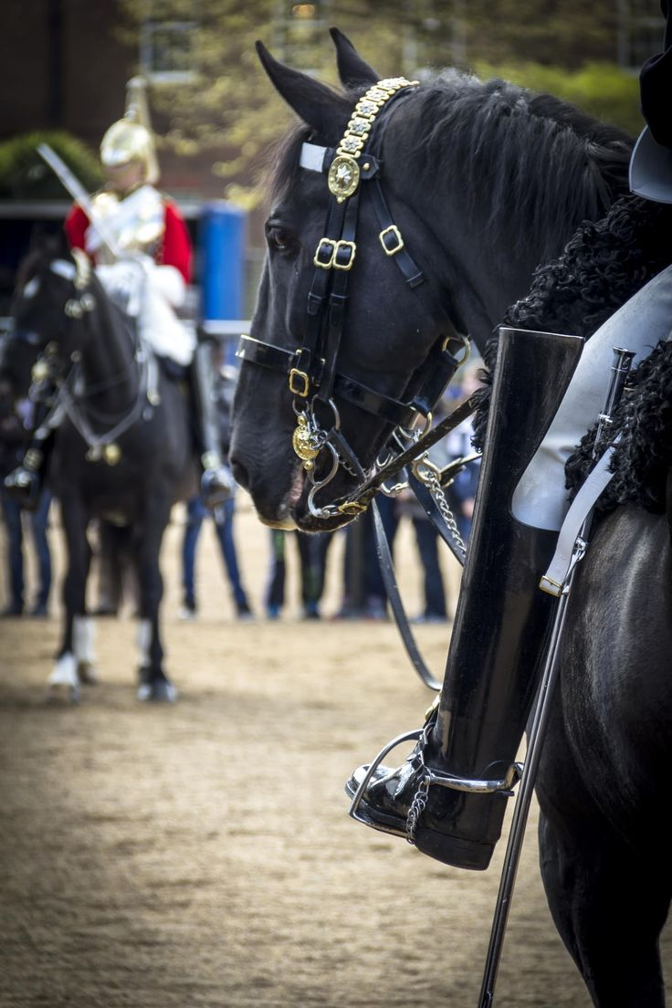 horse guard... by Ross Bishop on 500px
