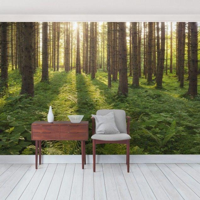 Selbstklebende Tapete - Fototapete Sonnenstrahlen in grünem Wald