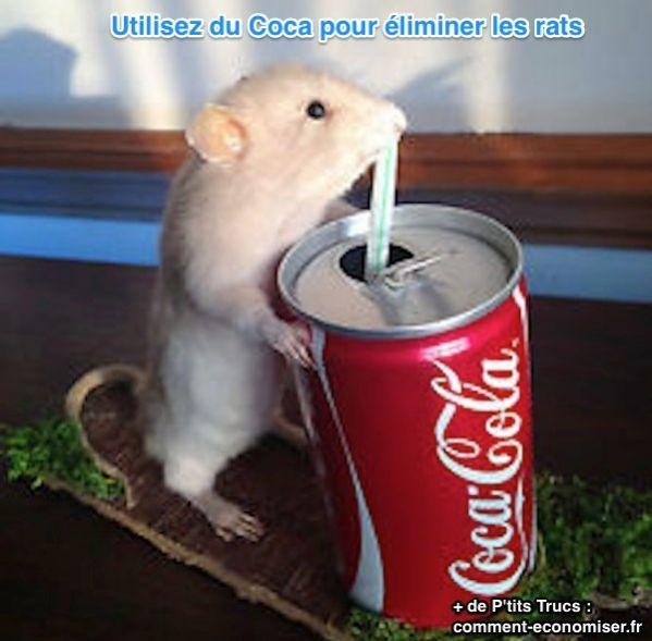 Comment se Débarrasser des Rats? Utilisez du Coca-Cola Comme Dératiseur Puissant.